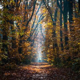 Autumn Stroll on a beautiful sunny autumn morning at estate 'Landgoed Geijsteren' (Geijsteren, Noord-Limburg, Netherlands).  If you lik...