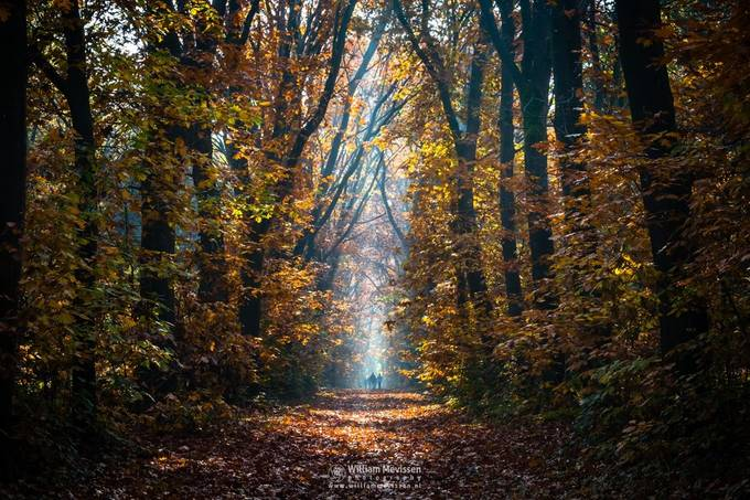 Autumn Stroll by williammevissen - The Emerging Talent Awards