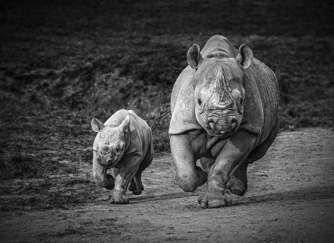 Mommy & Me by imeldabell - Big Mammals Photo Contest