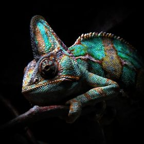 Chameleon by Dawn van Doorn.