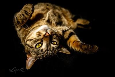 Rufus dufus #topcat