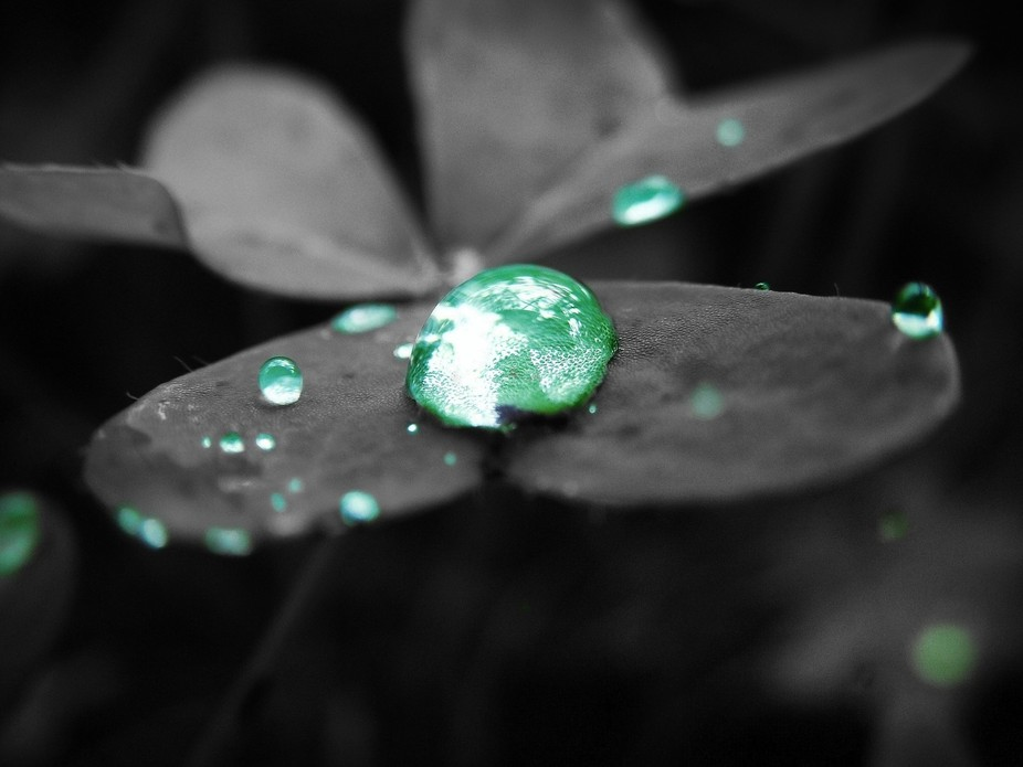 Photo of a clover just after morning rain