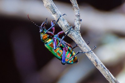 Bug in Living Color