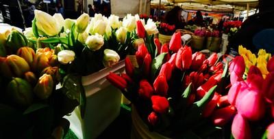 Tulips Trumpeting Spring