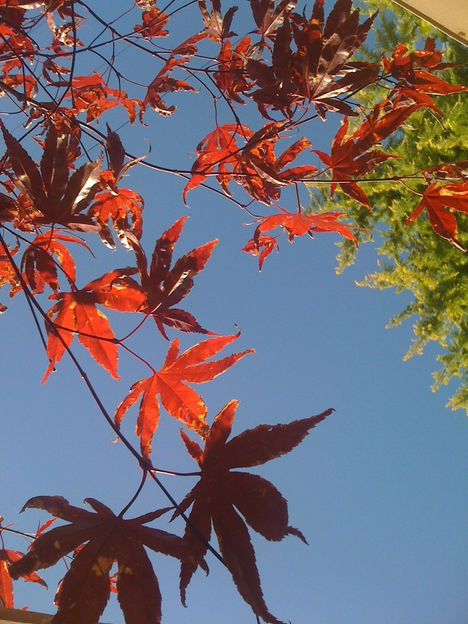 Leaves on the sky
