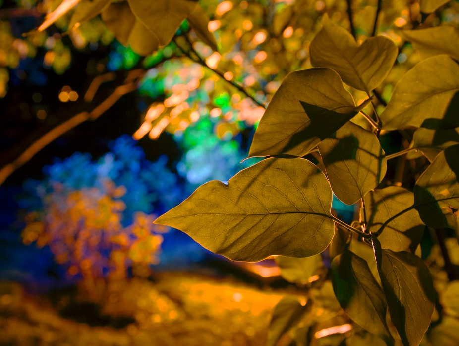 The picture was taken in St. Petersburg in October. Catherine's garden was illuminated w...