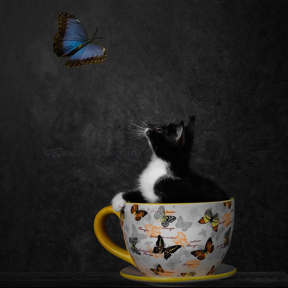 Butterfly Kitten #2 by Basciano_Photography - Fantasy In Color Photo Contest
