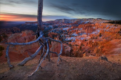 Roots, Bryce Canyon, UT