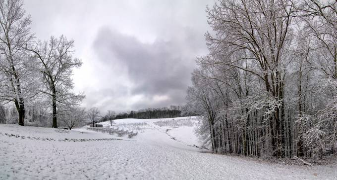 On the family farm in central West Virginia, there  are rows of grapes.  The snowy winter makes them sleep until the warmth of spring brings fruit.    This was a Nikon D300 pano of over 10 images, merged with AutoPano Pro and converted to B&W with Silver Effects Pro 2.