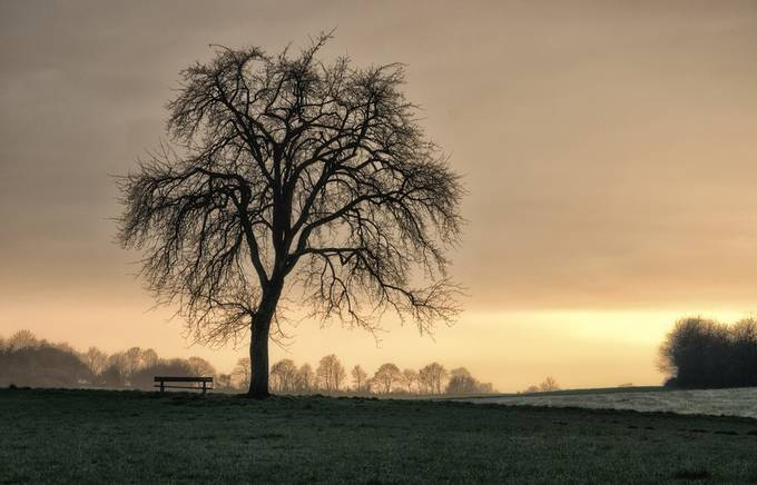 Home... by whaevamakesuhappy - Silhouettes Of Trees Photo Contest