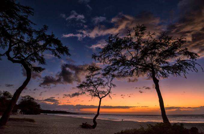 Last Night Sunset by robmin - Trees And Silhouettes Photo Contest