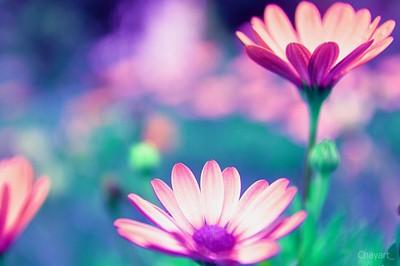 Dreamscape Flowers