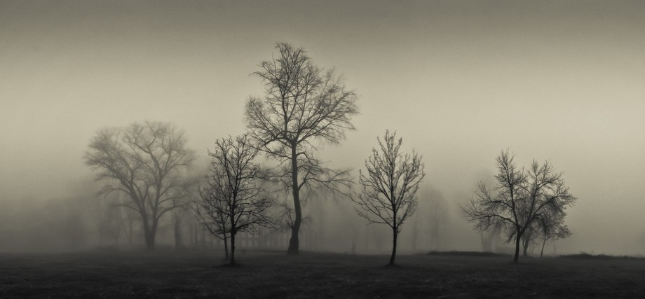 mesmeric grove