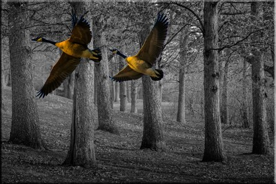 TREE Illusion