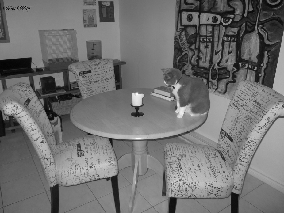 Cat dining room lounge