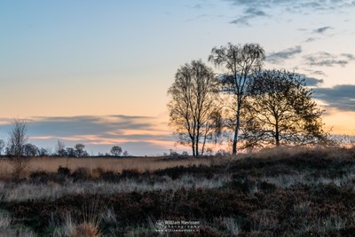 Twilight Silhouette Trees