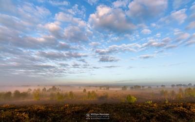 Misty Morning Sunlight (II)