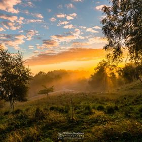 Golden Sunrise at Estate 'Landgoed De Hamert' part of 'De Maasduinen' National Park (Wellerlooi, Noord-Limburg, Netherlands).  I...