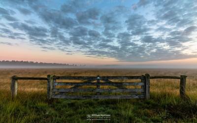 Misty Morning Gate