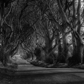 The Dark Hedges in Northern Ireland were planted in the 18th century as an avenue to the landowners mansion (the Stuart family). Today they are p...