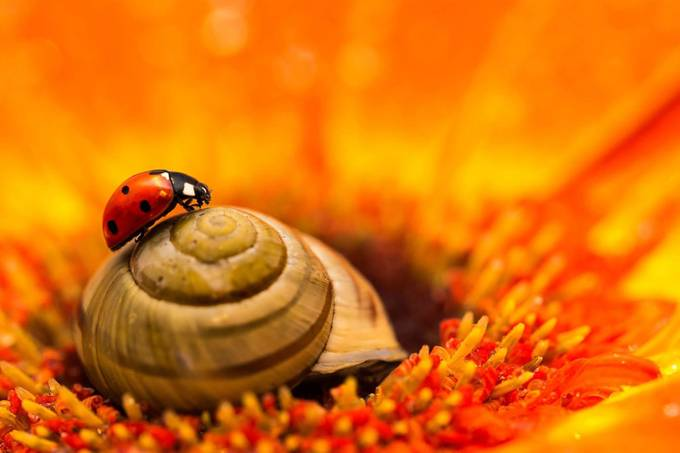 snail pull by keyllen - Close Up Art Photo Contest
