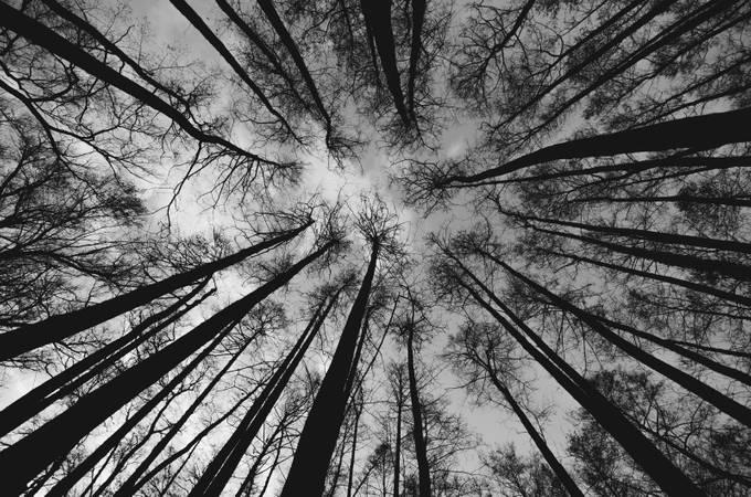 Up by whaevamakesuhappy - Tree Silhouettes Photo Contest