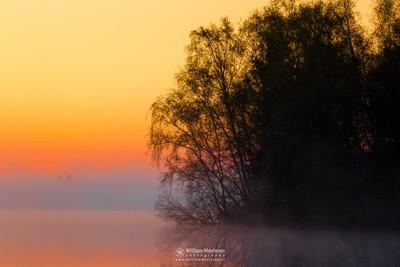 Foggy Sunrise 'Silhouettes'
