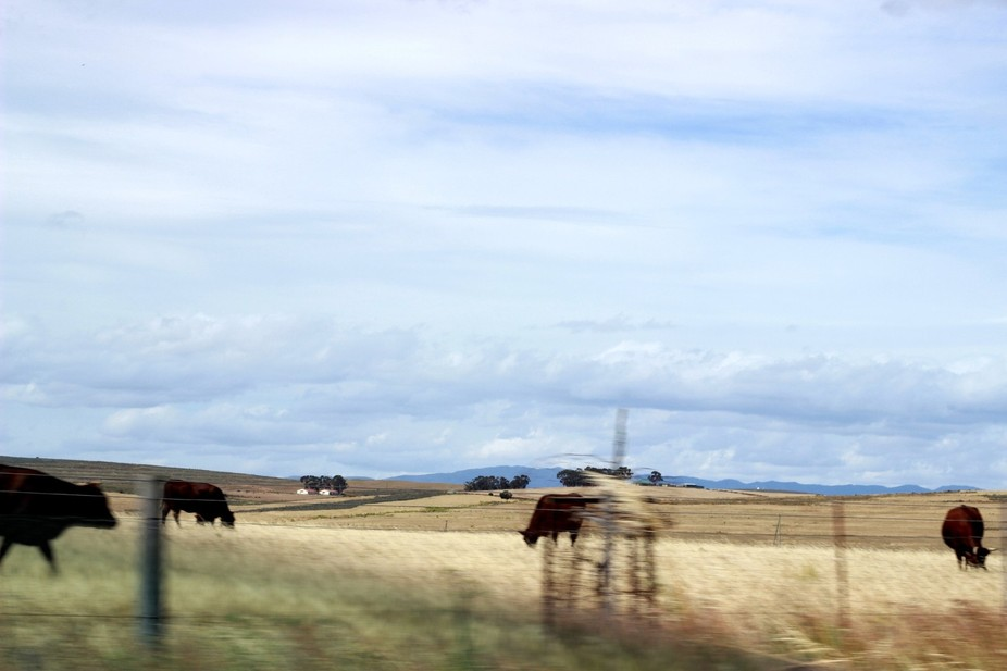 This photograph was taken on a roadtrip just outside of Cape Town. I had been taking photos of th...