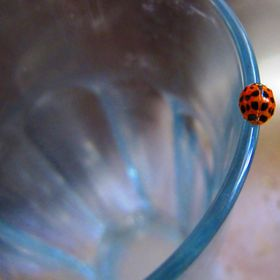 This ladybird landed on my empty glass and hung around for a while.