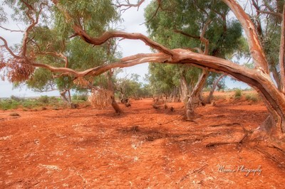 Red Dry River Bed_5759