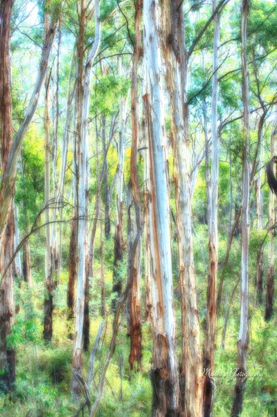 Trees_7801_HDR