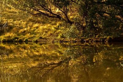 golden pond reflection sign