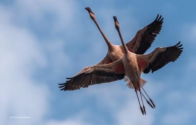 'Synchronised flight'