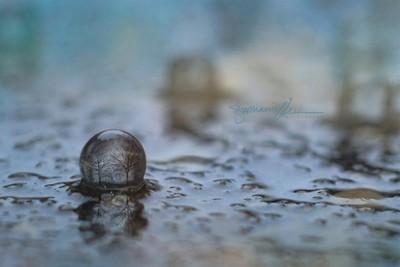 Rainy Day Reflections  ヅ