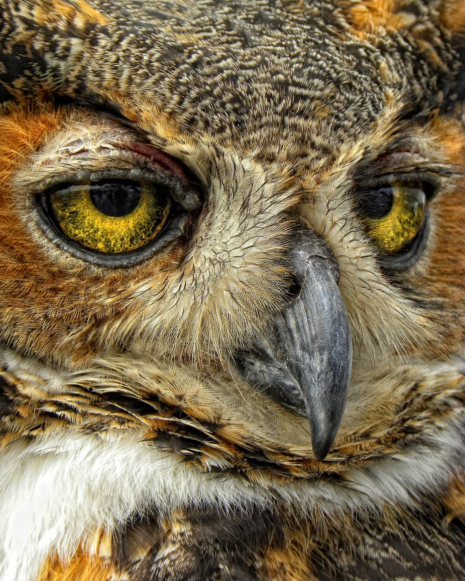 Wise One by amyholley - Beautiful Owls Photo Contest