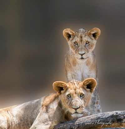 Young Lions_8855