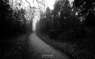 Misty Forest Lane 'B&W'