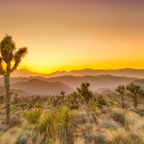 After a full day of hiking.  Kevin and I decided to pick a place to photograph the sunset.  I just loved the joshua tree since this is where we  ...