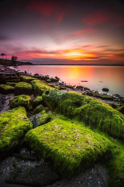 Mossy Sunset Portrait