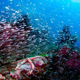 Beautiful reef in the deep of Similam islands. Thailand.