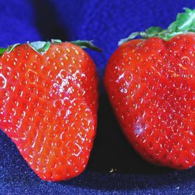 Strawberry & Strawberry Canon EOS 760 D Tamron SP AF 90mm f/2.8 Di 1:1 Macro f 5/6;  1/160sec;  no flash, artificial light in room, ISO-5000