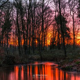 Fire in the sky at the brook 'Oostrumse Beek' during sunrise in the forest of estate 'Landgoed Geijsteren', Geijsteren, Netherlands.  ...