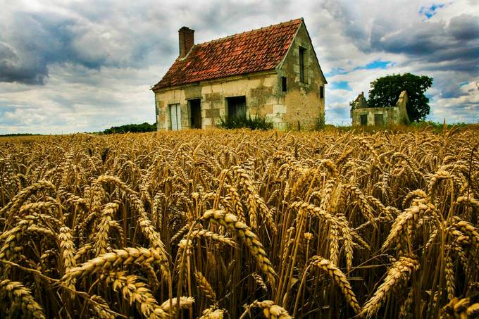 Wheat Crop in France  by ronsmith - Discover Europe Photo Contest