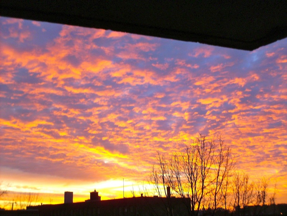Taken on my balcony at 7 am one morning in March.