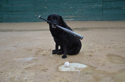 Rainouts are for the dogs