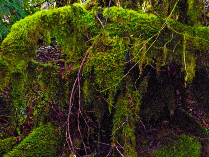 Furry Green Tree