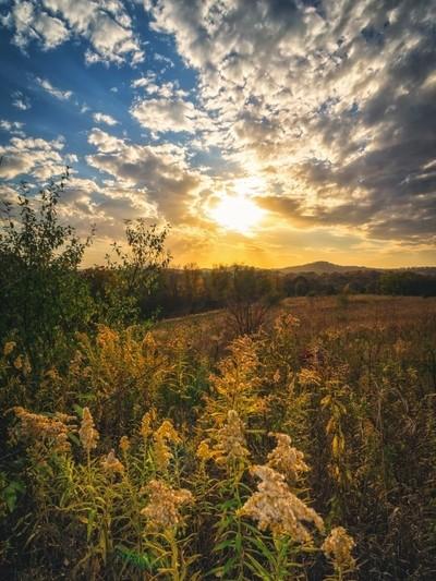 Goldenrod Sunset