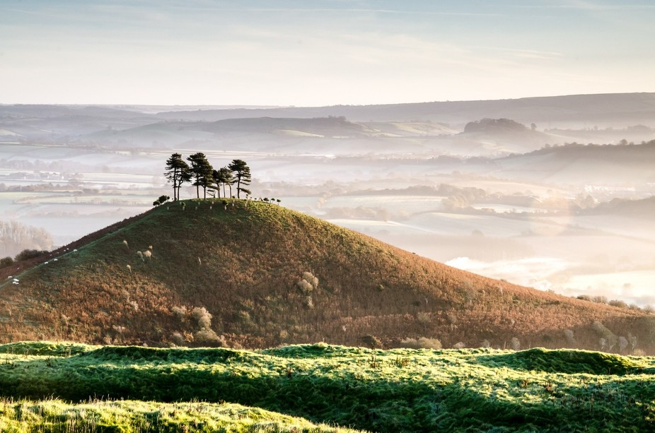 A cluster of trees atop a stand-out hill in Dorset, England
