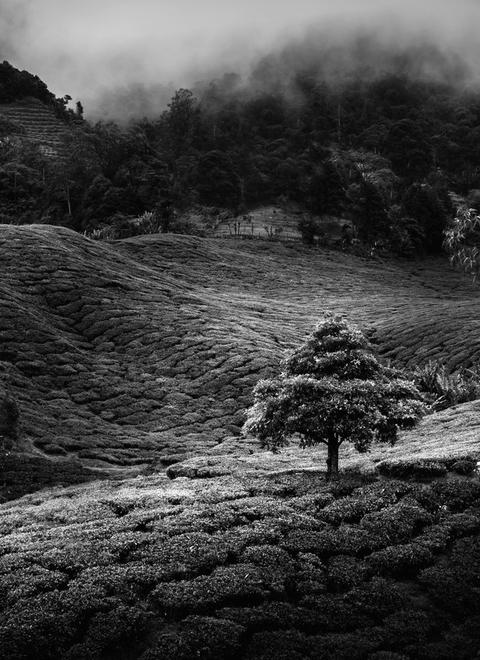 Lonely Tree by aiimon22 - Feeling Hope Photo Contest