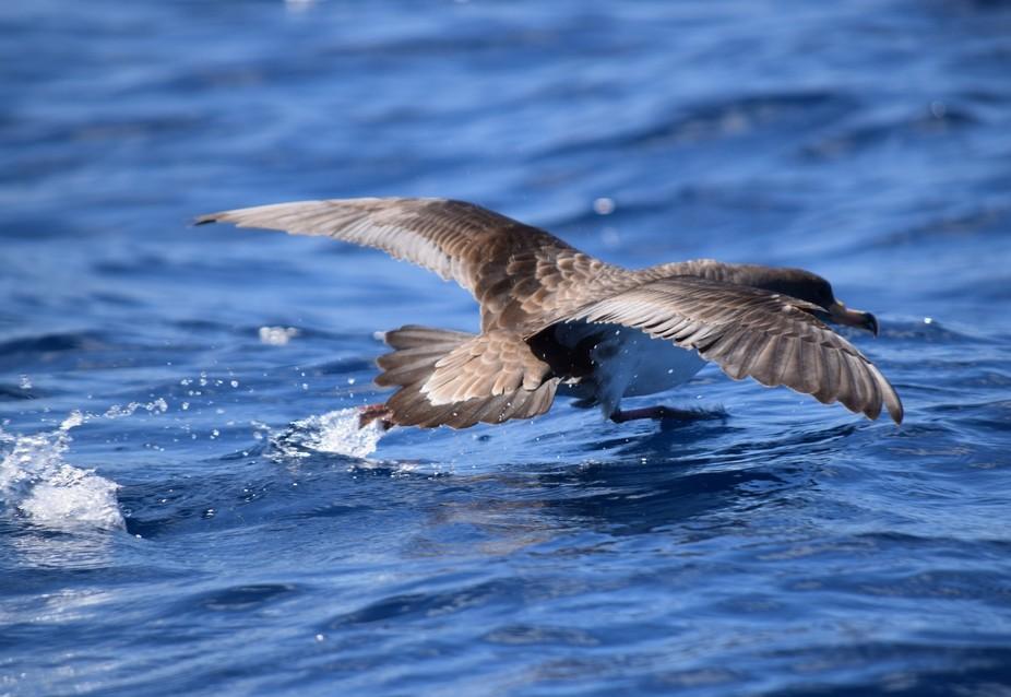 annette furley taking off